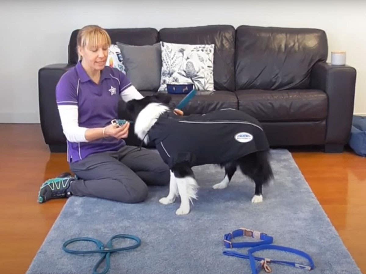 Teach Your Dog Collar Manners