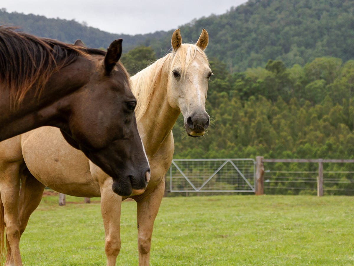 Deworming When Moving Horses