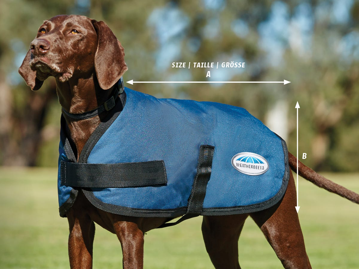 How to Measure, Fit & Care for Your WeatherBeeta Dog Coat