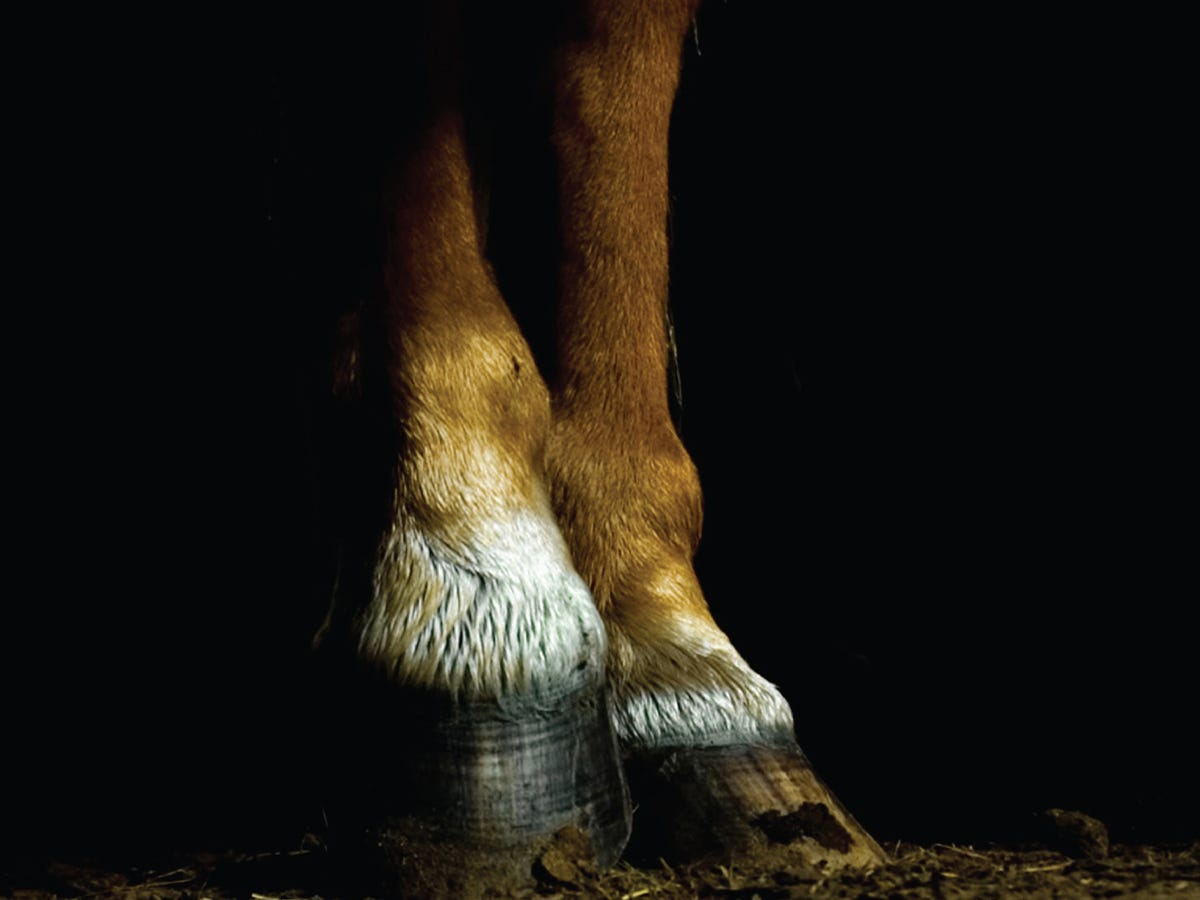 caring of hooves