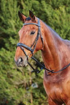 11 Crystal Flash Bridle