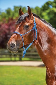Two Toned Rope Yachting Headcollar