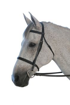 Padded Cavesson II Bridle