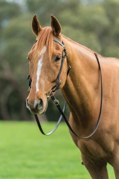 Brass Barcoo Bridle