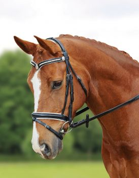 TRAVERS FLASH BRIDLE