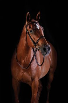FLAT PATENT CAVESSON BRIDLE