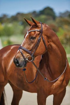 Lateral Flash Bridle