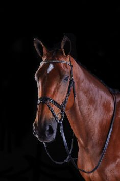 MULTI CRYSTAL CRANK FLASH BRIDLE
