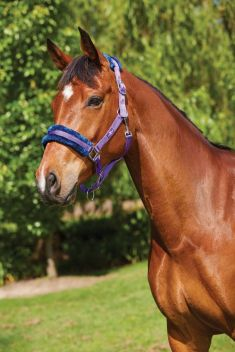 Element Fleece Headcollar