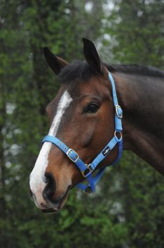 Nylon Brass Buckle Headcollar