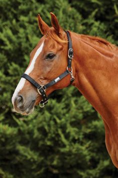 Fleece Trim Headcollar