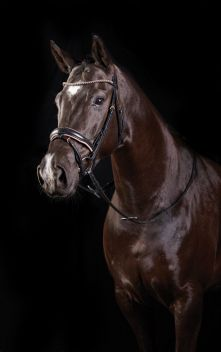 Rose Gold Crystal Flash Bridle