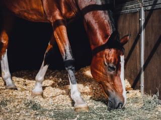 Horse in stall with sunshine streaming down onto its face and coat.