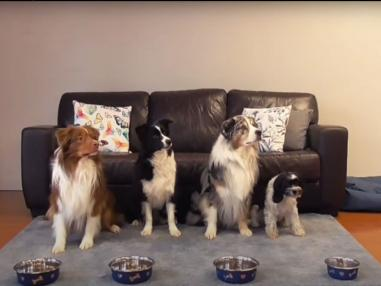 Teach Your Dog Bowl Manners