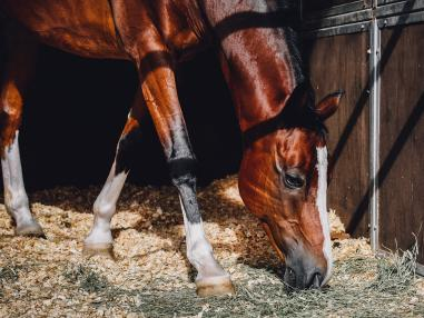 How to Protect You Horse from the Sun This Summer