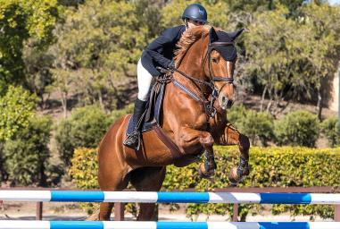 Joint Health and Management in Horses