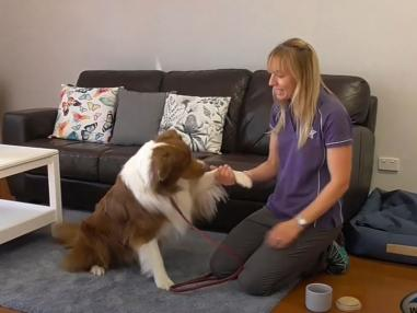 Teach Your Dog to Shake Hands