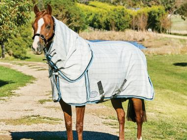 Which Summer Sheet is best for my horse?