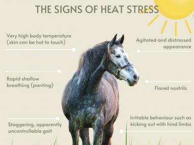 Sizzling Summers for horses in Australia – it is time to cool off and Recharge