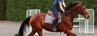 Saddles & Saddlery